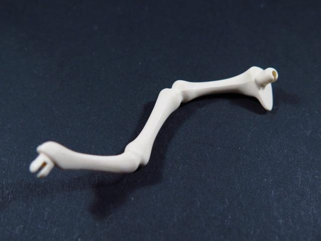 Beinknochen